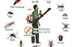 Dịch vụ diệt muỗi tại Vũng Tàu