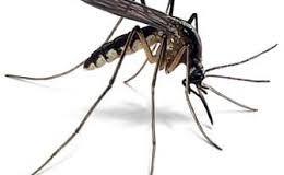 Dịch vụ diệt muỗi tại TP HCM