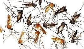 Diệt muỗi tận gốc quận 1