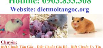 Diệt chuột tại khu công nghiệp tân bình
