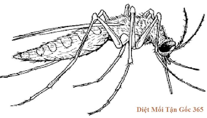 diệt muỗi 365 chất lượng
