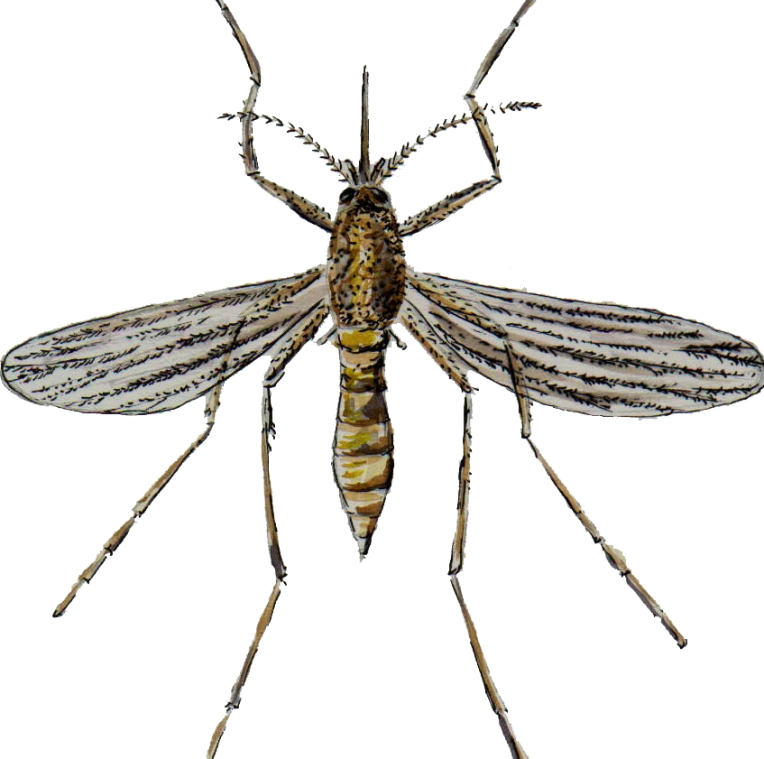 diệt muỗi 365 tphcm