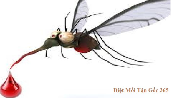 diệt muỗi 365 uy tín