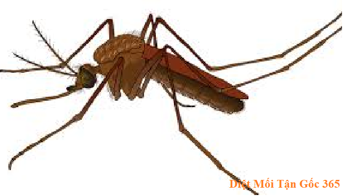 diệt muỗi hiệu quả giá rẻ