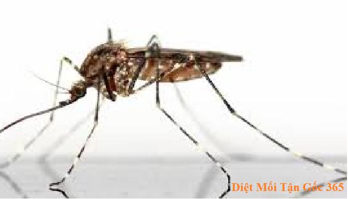 diệt muỗi hiệu quả uy tín