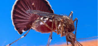 Diệt muỗi tận gốc