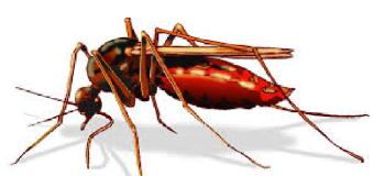 Diệt muỗi trong nhà