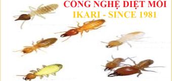 Thuốc diệt mối Ikari Nhật Bản