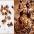 Diệt mối côn trùng Bình Dương giá rẻ 24h