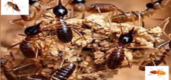 Diệt mối côn trùng ở Bình Dương