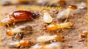 Diệt mối tại Hà Nội