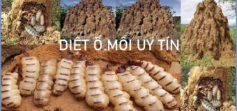 Diet O Moi Uy tin